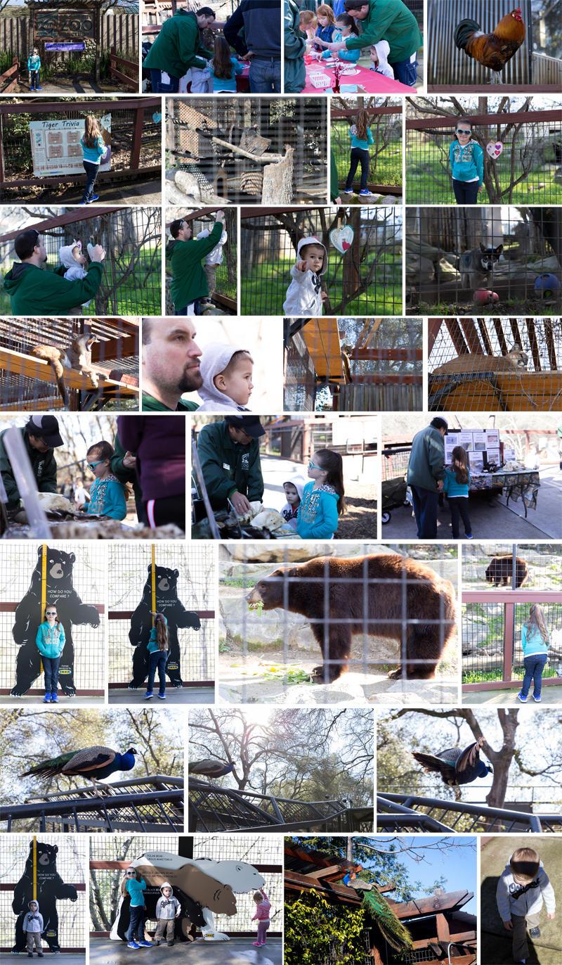 Folsom Zoo