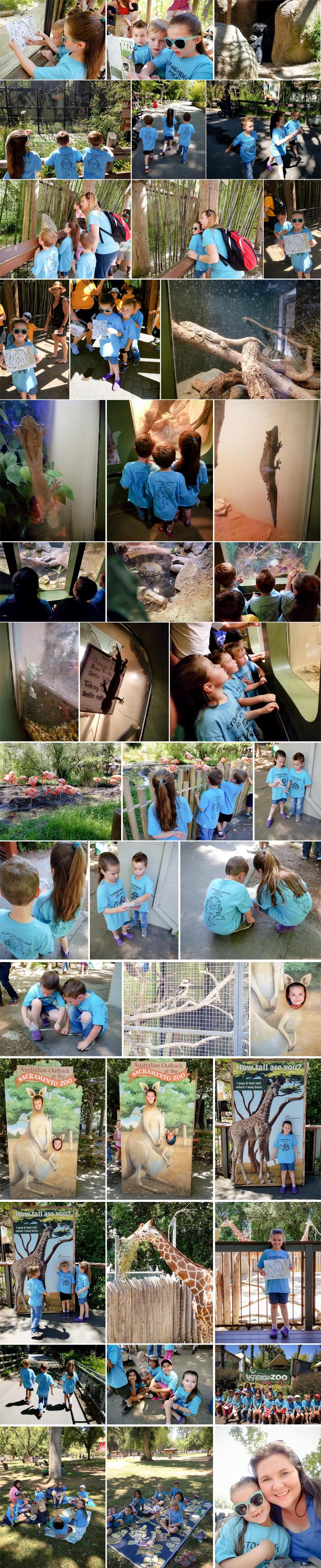 Sacramento Zoo Field Trip