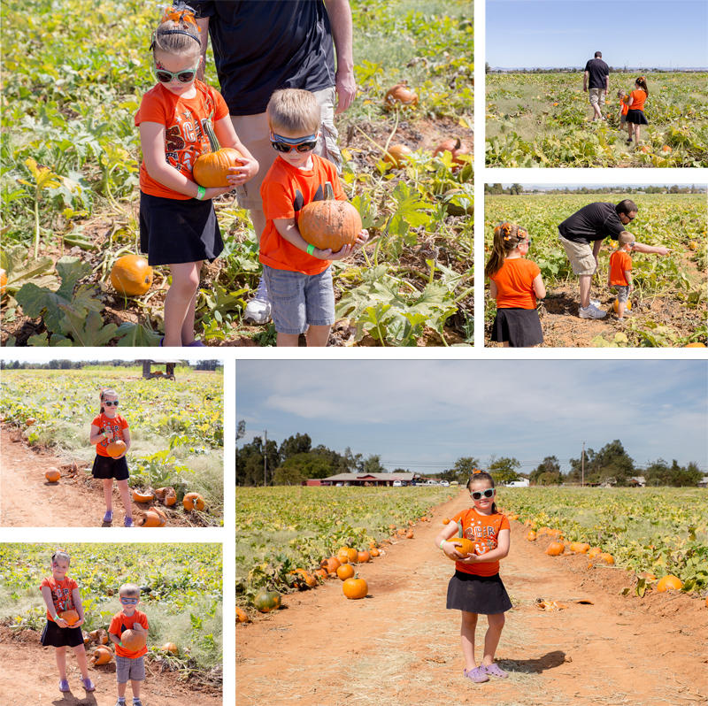 Picking Pumpkins in the Patch