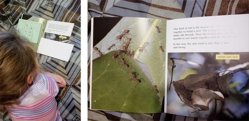 Ant Book