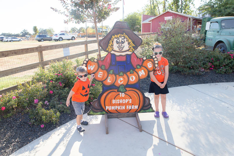 Bishops Pumpkin Farm 2017
